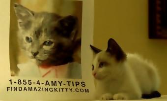Vidéo : Gone Girl refait avec des chatons !