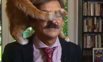 Un chat monte sur les épaules d'un historien en pleine interview tv et fait le buzz