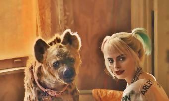 Birds Of Prey : la réalisatrice réagit au bide de son film Harley Quinn avec Margot Robbie