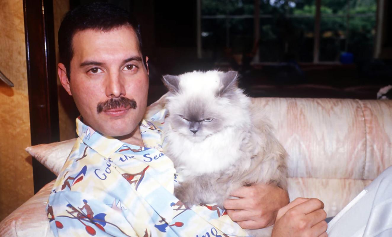 Bohemian Rhapsody : le vrai du faux du biopic sur Freddie